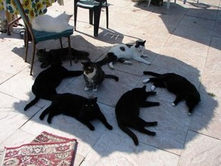 cats-in-the-shade-1.jpg