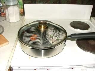 firecats-are-hot.jpg