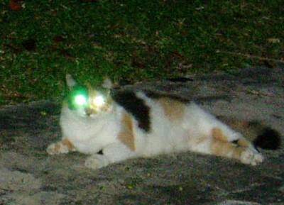heterochormia-catlights.jpg