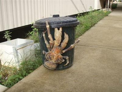 coconut-crab-arb.jpg