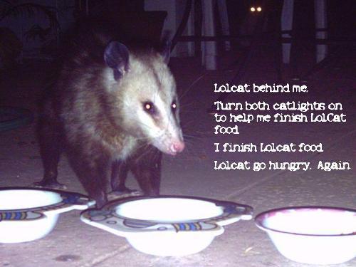lolpossum-catfood.jpg