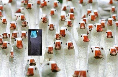 geese-2.jpg