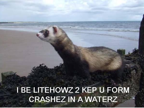 lol-ferret-litehouse2.jpg