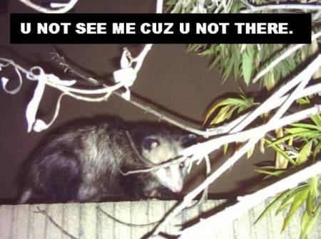 080323-lol-possum.jpg