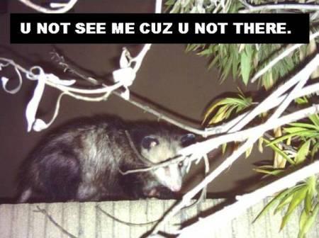080323-lol-possum.jpg