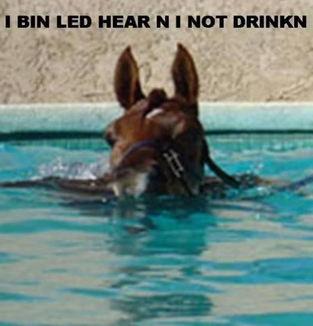 lol-horse.jpg