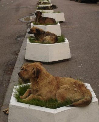 dogperplanter