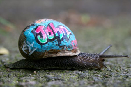 graffiti-snails