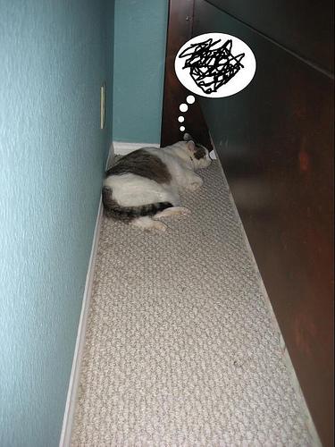 lucid-cat-dreams_visla-090213