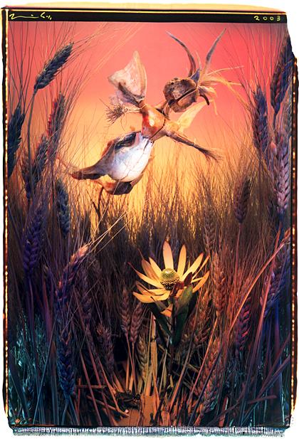 scarecrow-fairy420