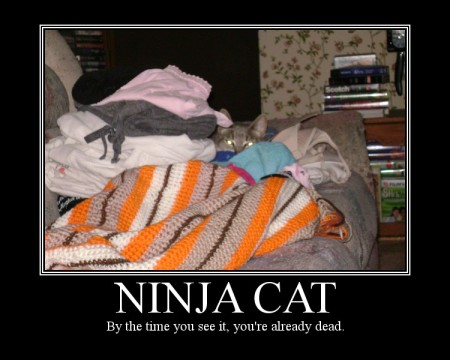 ninja-cat-2_tackyraccoons.jpg?w=450&h=36
