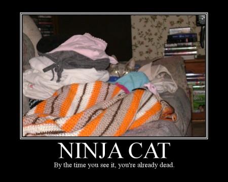 Ninja Cat 2_tackyraccoons