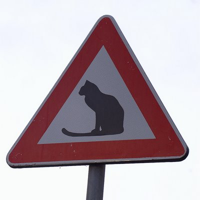Yield to the Cat_NTN 090619
