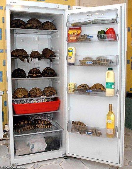 Cool Tortoises_MrReid 090430
