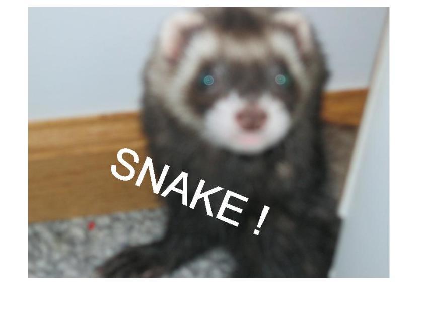 lol-ferret-snake