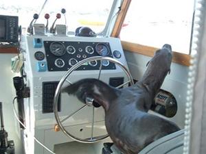 Sea Lion Newport Beach_KTLA 010709