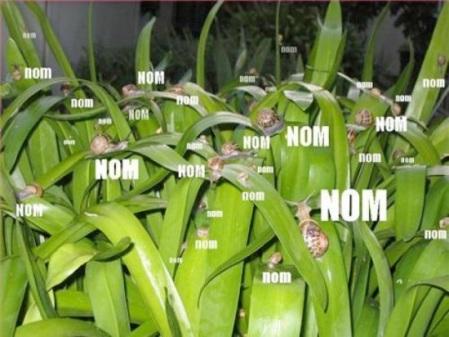 Snail Nom_Demonicious 090121