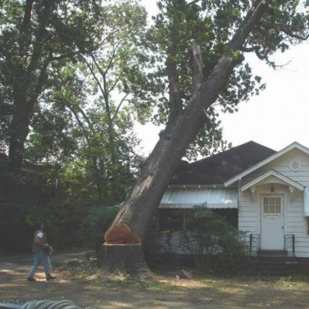 Ignosecond Tree_Demonicious