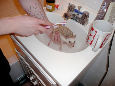 Wash Your Hedgehog Day_A Problem Shared 090906