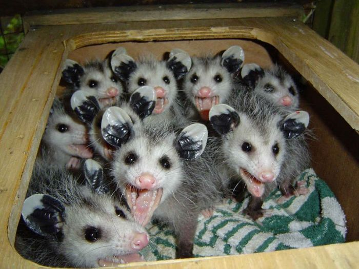 Possums And Cat Food