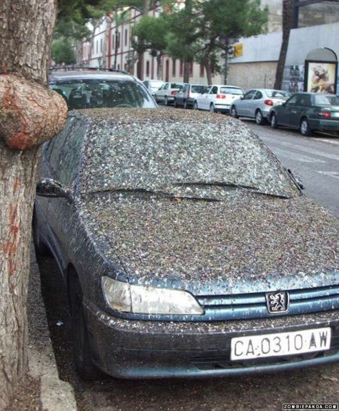car wash | Tacky Raccoons