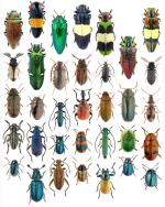 Meet The Beetles 0.1