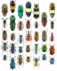 Meet The Beetles 0.1