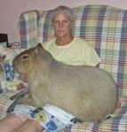 capybara lap warmer