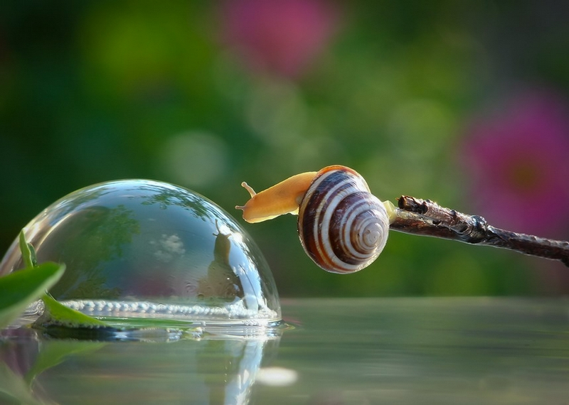 Snail Mirror