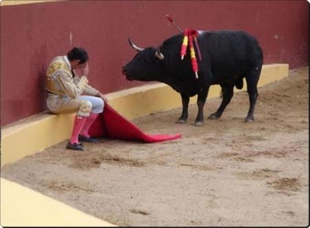 Bull Pooped