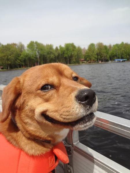 Dog Trollface