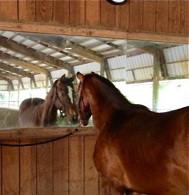Horse Barbershop