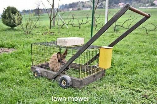 slow-lawn-mower