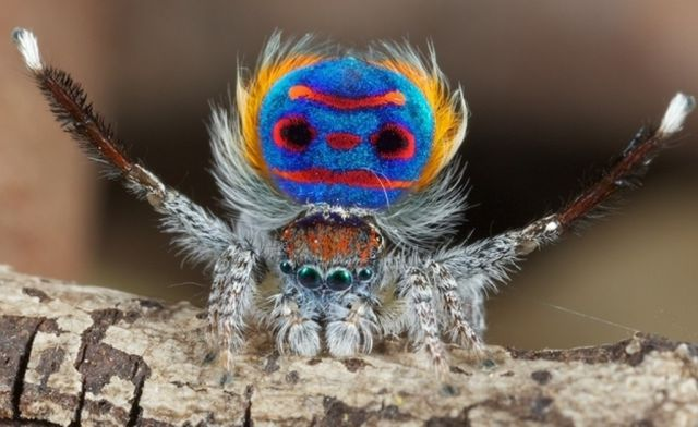 I Am A Spider DEAL WITH IT
