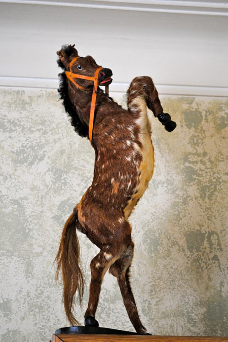 Crappy Taxidermy Colt FAIL