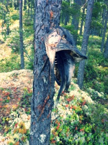 Northern Arboreal Dogfish