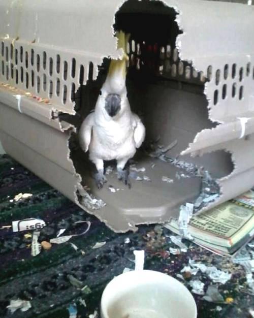 I Am A Bird. DEAL WITH IT