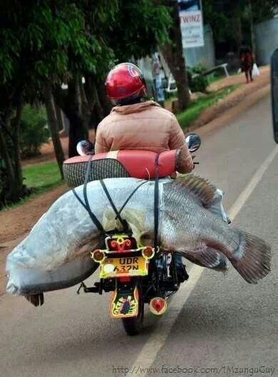 Biker Fish