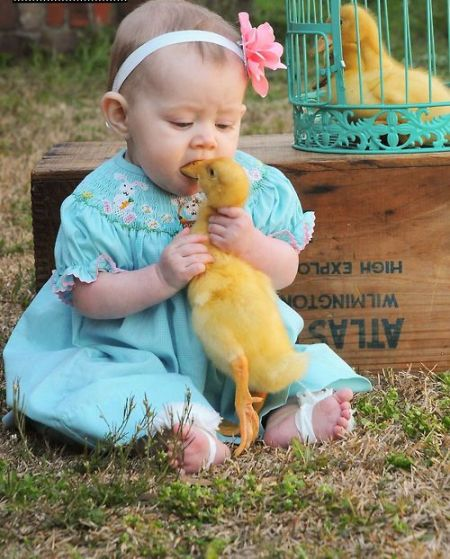 Eat A Duck