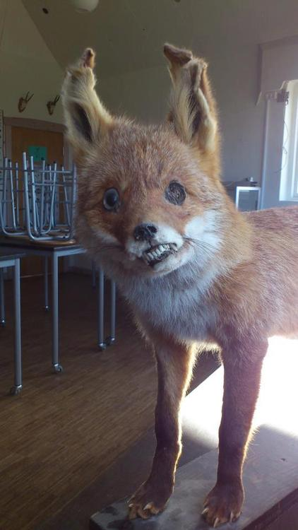Crappy Taxidermy Classroom FAIL
