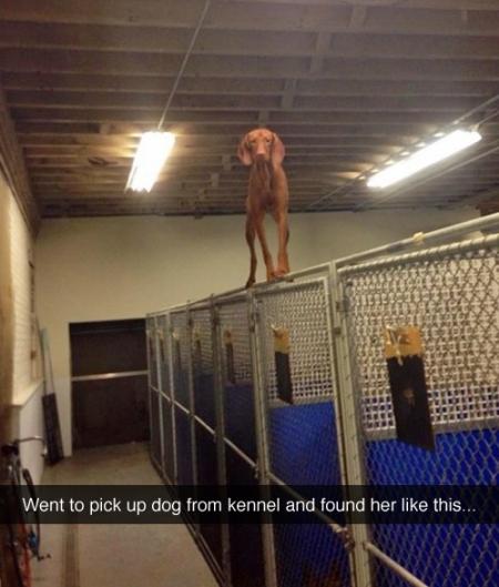 Dog Pwnd