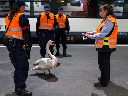 Talk to the Swan