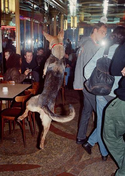 Dog Clubbing