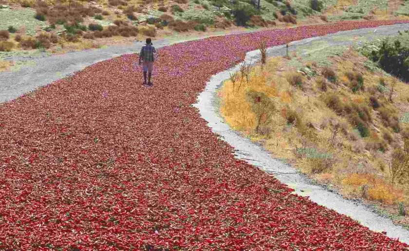 Annual Chili Migration