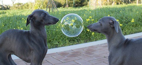 Bubble Dogs