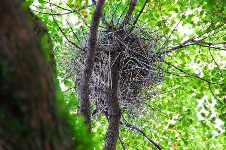 clothes hanger crows nest 1