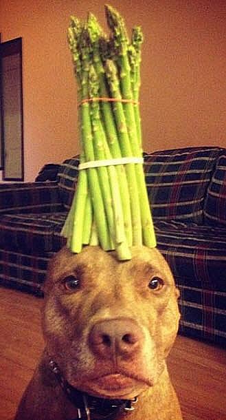 Dog asparagus