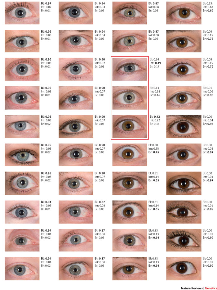 Eye Colors Blue to Brown