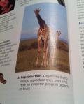 Textbook Lie