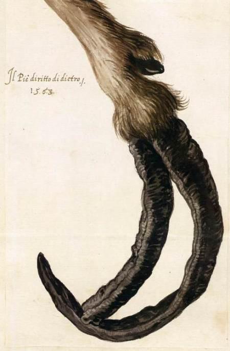 Arcimboldo's Goat Hoof 1563